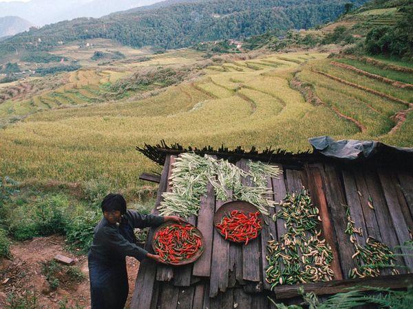 bhutan-drying-food_2848_600x450
